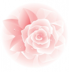 rose bouquet vector image