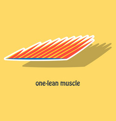 sticker of structure skeletal muscle anatomy vector image