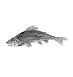 American rainbow trout salmon-predatory fish vector