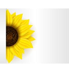 Sunflower banner vector