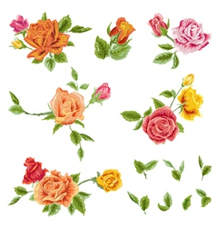 Watercolor Roses Set - floral background vector image vector image