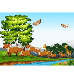Deers and giraffes in the field vector image vector image