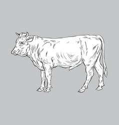 Bull line art vector