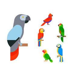 Parrots birds breed species animal nature tropical vector