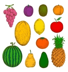 Fresh and juicy fruits sketches vector