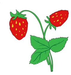 The bush of ripe strawberries vector