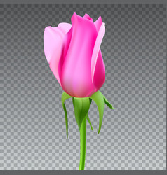 Realistic rose bud with stem and leaves closeup vector
