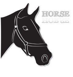Horse head in black and white vector image vector image