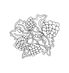 Hand drawn doodle outline grape fruit magic line vector image vector image