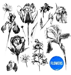Collection of hand drawn flowers vector image vector image