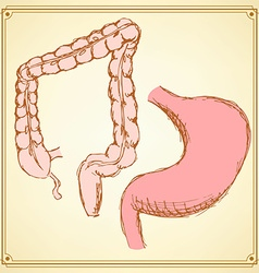 Sketch stomach and rectum in vintage style vector