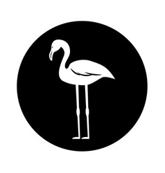 Flamenco exotic bird icon vector