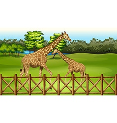 Giraffes in the forest vector