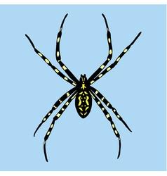 spider Argiope bruennichi vector image vector image