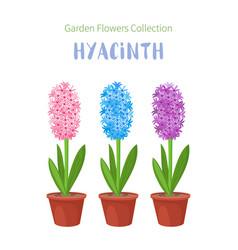 Spring flowers in flower pots irises lilies of vector