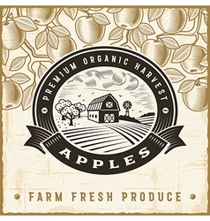 Vintage apple harvest label vector image
