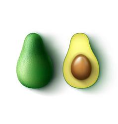 Whole and half cut avocado vector