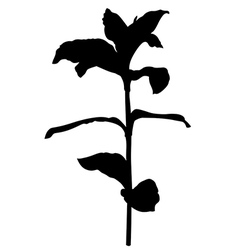 Herb plant vector