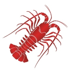 Boiled spiny or rock lobster vector