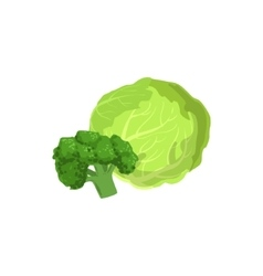Broccoli and cabbage bright color isolated vector