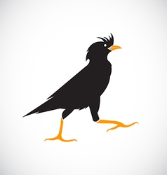 Image of anacridotheres bird vector