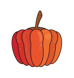 Pumpkin vegetable food fresh vector