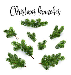 Set of fir branches christmas tree pine conifer vector
