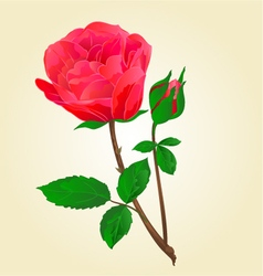 Twig red rose stem with leaves and bud vector
