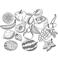 Fruits coloring book for adults vector