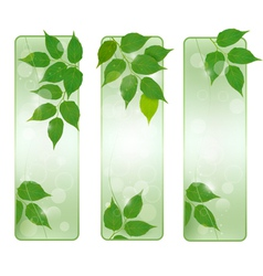 Three nature banners with green fresh leaves vector