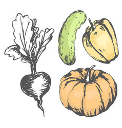 Colorful graphic vegetables with colorless beet vector