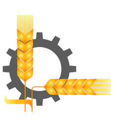 field ripe wheat spikelets reaping harvest time vector image