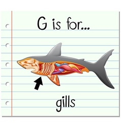 Flashcard letter g is for gills vector
