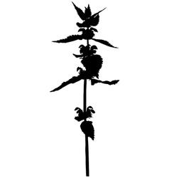 Grass flower vector