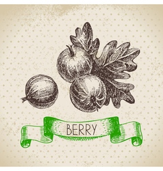 Gooseberry Hand drawn sketch berry vintage vector image vector image
