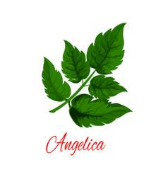 Angelica plant or wild celery green branch vector