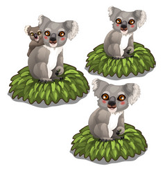 Koala bears family sits on leaves animals vector