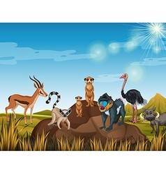 Many animals standing in the field vector image vector image
