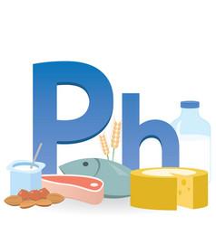 Phosphorus rich foods vector