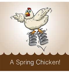 English idiom spring chicken vector