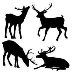 Beautiful noble proud sika deer are ruminant vector