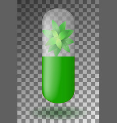herbal capsule with mint leaves inside isolated vector image