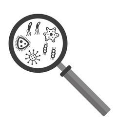bacteria microbe under magnifier vector image vector image