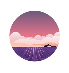 Lavender fields provence france spring vector