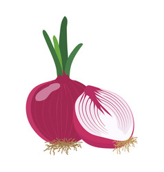 red onion with slice flat design vector image vector image