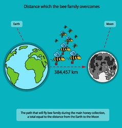 Infographics on bees vector