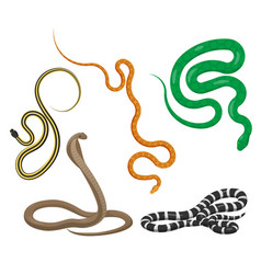 Slither snakes top view icons set vector