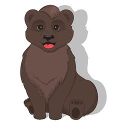 Sitting bear on white background vector