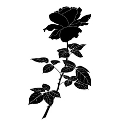 Flower rose silhouette vector image