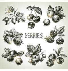 Hand drawn sketch berries set of eco food vector